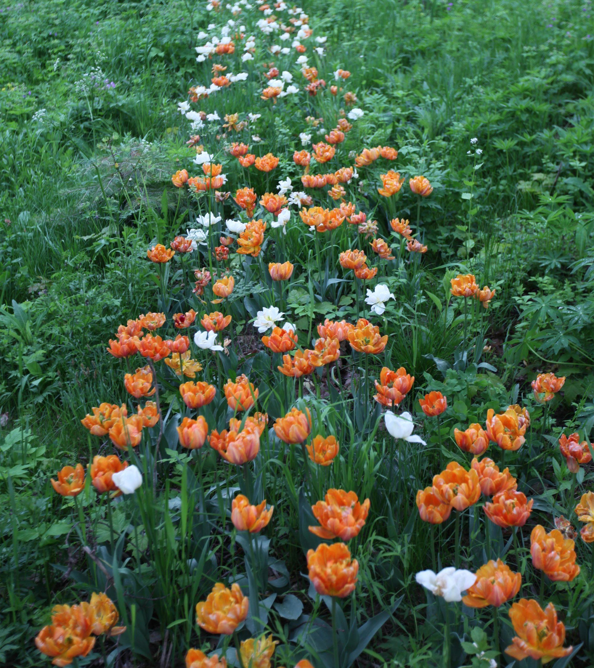 Kauniaisissa toteutetun Rytmi-kukkapuiston istutuksia